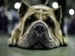 МВД утвердило список потенциально опасных собак